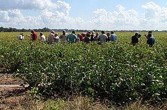 picture of people in field